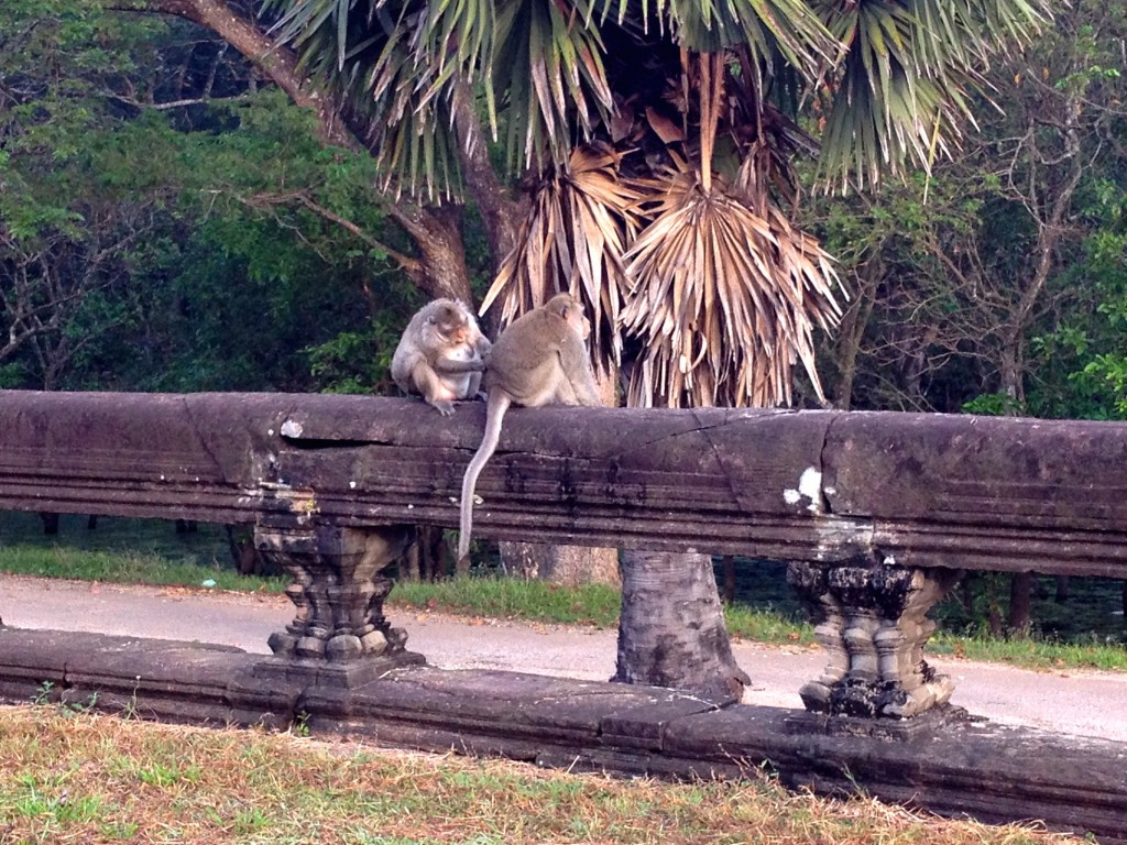 Monkies at Angkor Wat