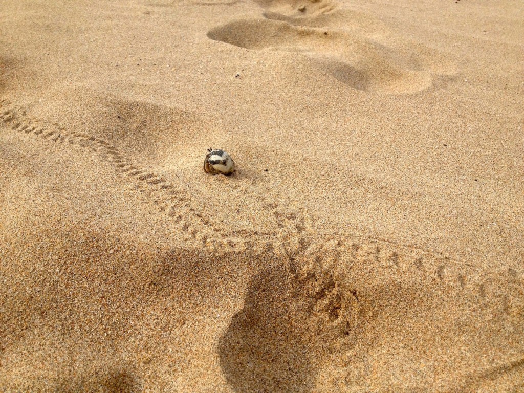 Hermit Crab Tracks Are Everywhere on Koh Lanta's Beaches!