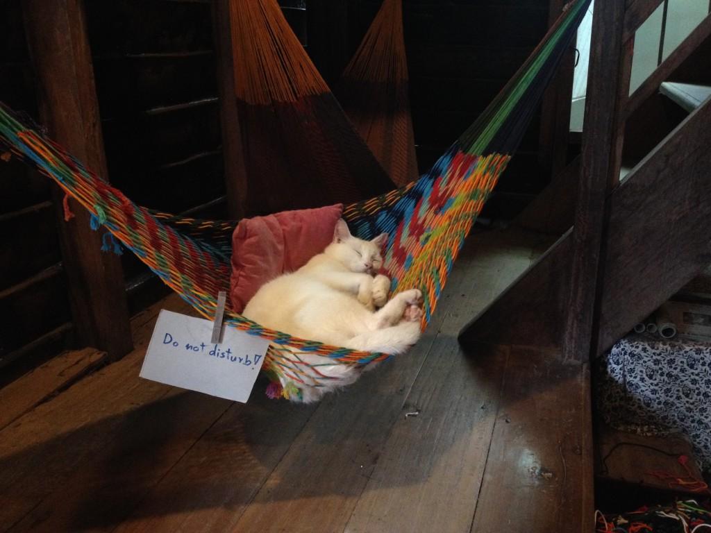 A Cat Hammock!