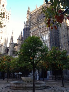 Sevilla's Cathedral has a beautiful courtyard full of orange trees!