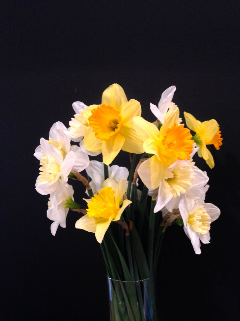 Daffodils From The Green Market For Less Than A Buck!