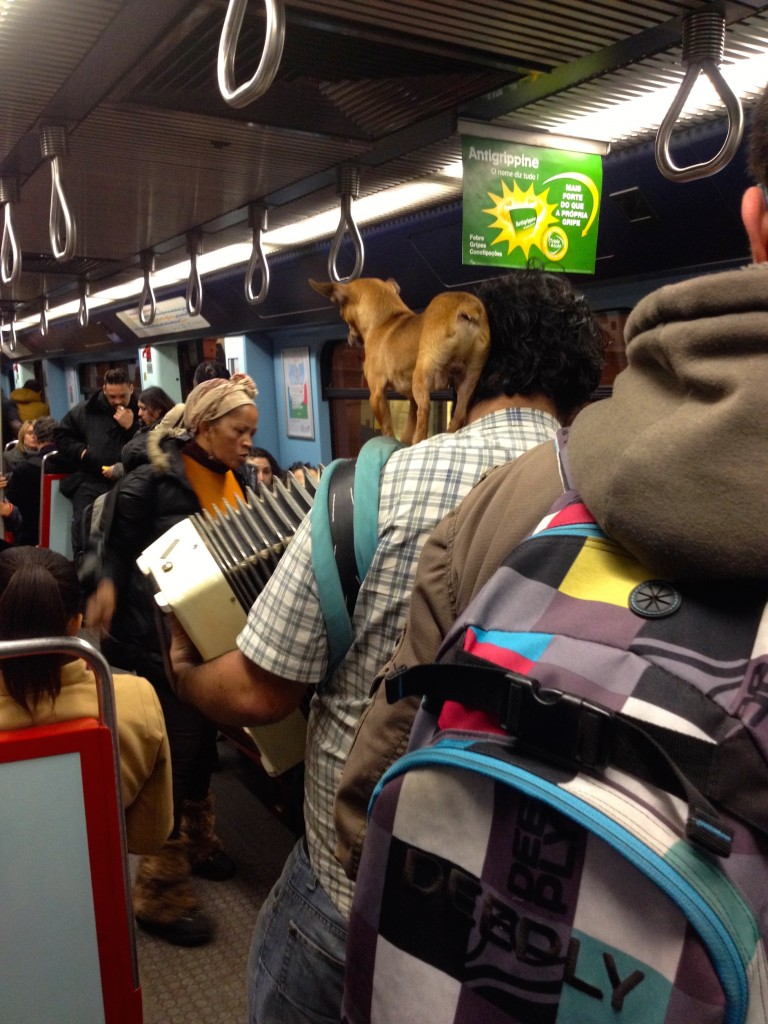When we didn't walk, we rode the subway, where men playing accordions walked around with chihuahuas on their shoulders. Of course.