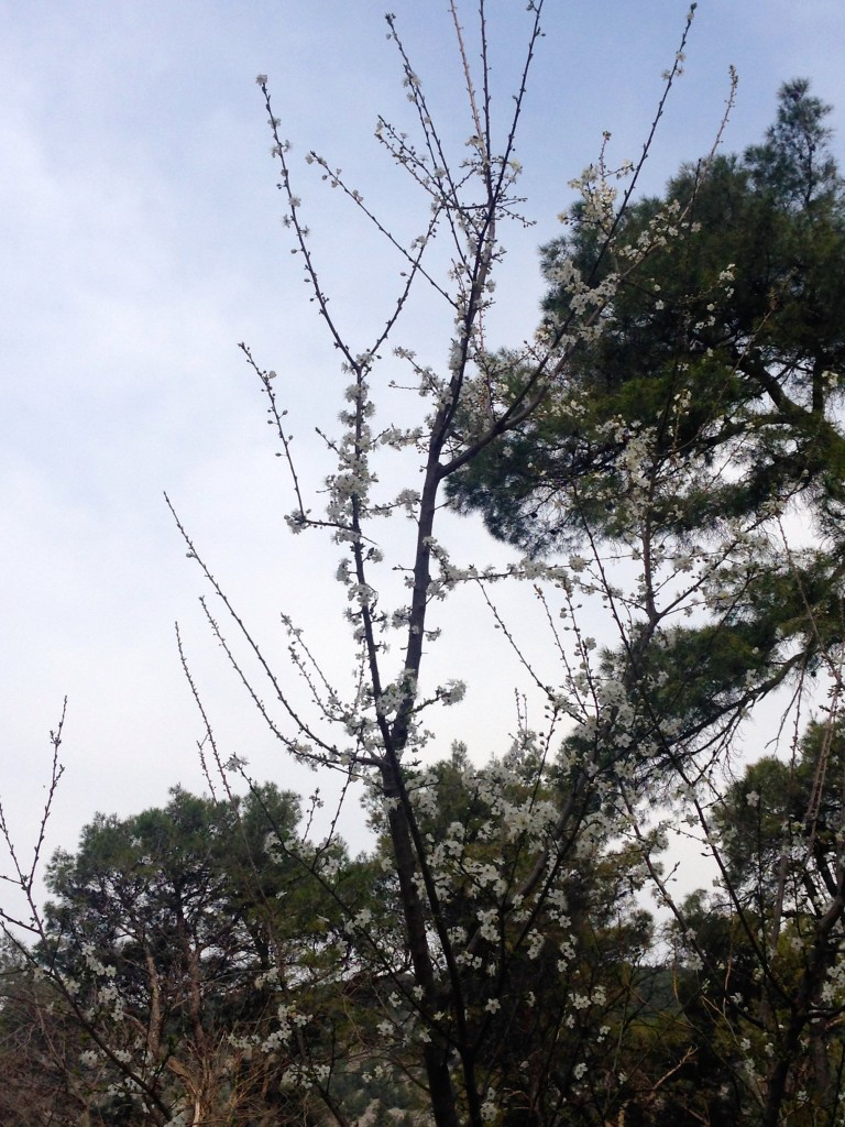 We visited Krka in the Spring, on March 17th. The trees are starting to bloom in the park!